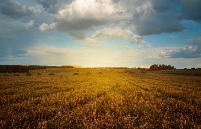 alior bank gwarancja rolna